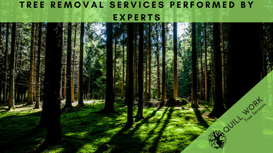 Tree Services Performed by Experts
