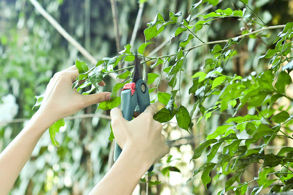 Tree Maintenance – The Need to Regularly Trim Your Trees